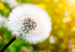 Alergii și Primăvara